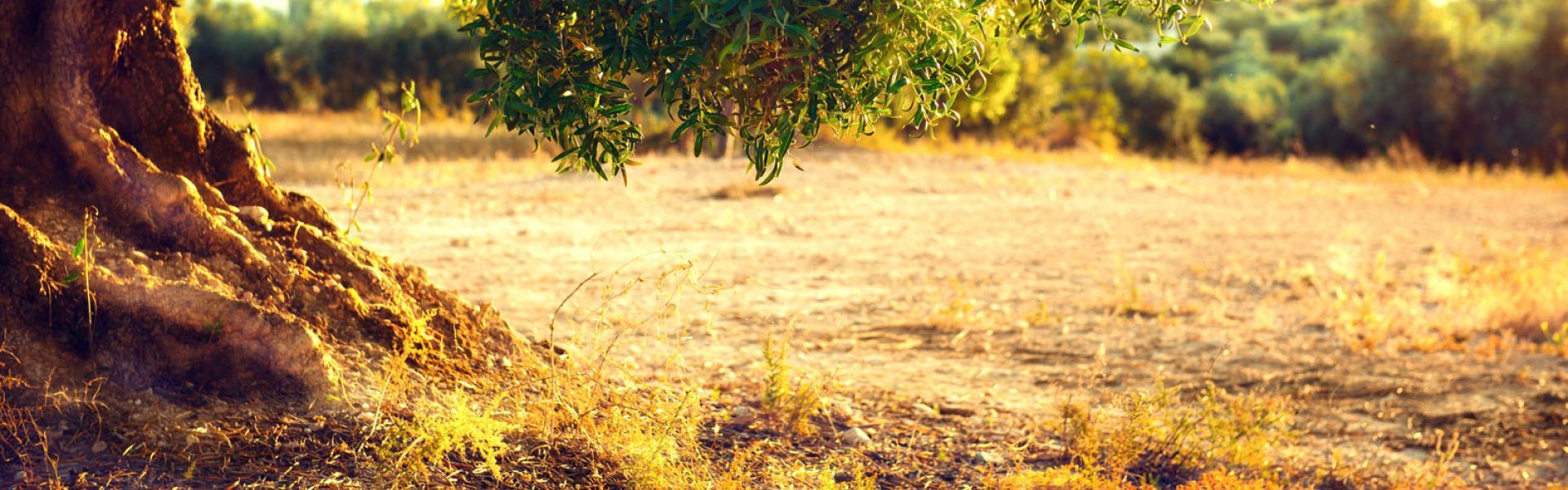 Olivenhain Mediterran